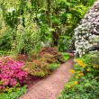 Rhododendron Bushes in Summer Garden — Stockfoto
