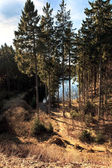Mountain lake and forest — Stock Photo