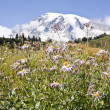 Stock Photo: rainier wildflowers