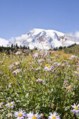 Rainier wildflowers — ストック写真