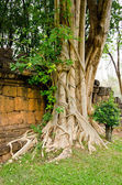 An interesting tree root, Kanchanaburi in Thailand — Stock Photo