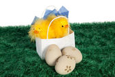 White paper bag with Easter baby chickens — Stock Photo