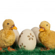 Easter ducklings — Stock Photo
