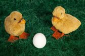 Cute fluffy Easter ducklings — Stock Photo