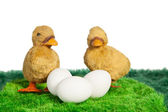 Two yellow toy chicks with three eggs — Stock Photo