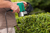 Hedge cutting — Stock Photo