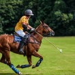 Polo Player — Stock Photo