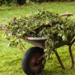 Stock Photo: Full wheelbarrow