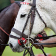 Horse halter — Stock Photo #30175901