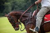 Horse Pose — Stock Photo