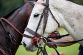 Horse halter — Stock Photo