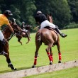 Stock Photo: Polo horse break