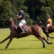 Stock Photo: Polo Ball hit