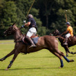 Polo bal hit — Stockfoto #33426073