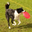 Frisbee fun — Stock Photo
