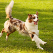 Happy dog — Stock Photo #12041346