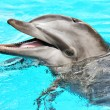 Постер, плакат: Friendly dolphin