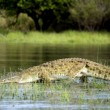 Crocodile, Selous Game Reserve, Tanzania — Stock Photo