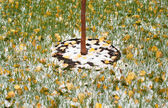 Trunk of a tree in garden amoung grass, leaves and snow — Stock fotografie