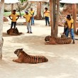 Stock Photo: Tiger at Buddhist Tiger temple near Kanchanaburi