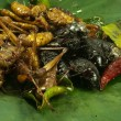 Deep-fried insects — Stock Photo