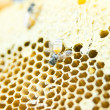 Honeycomb — Stock Photo #12848304
