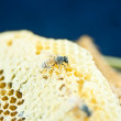Honeycomb — Foto de Stock