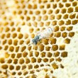 Honeycomb — Stock Photo #12848316