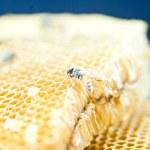 Honeycomb — Stock Photo #12848339