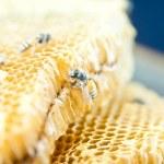 Honeycomb — Stock Photo #12848340