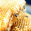 Honeycomb — Stock Photo #12848359