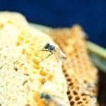 Honeycomb — Stock Photo #12848363