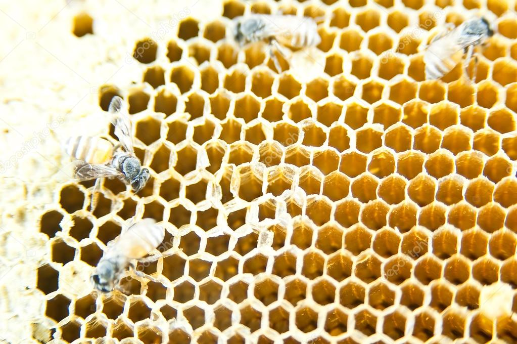 A honeycomb is a mass of hexagonal wax cells built by honey bees — Stock Photo #12848310