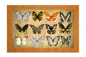 Butterflies in the frame — Stock Photo