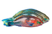 Parrot fish — Stock Photo
