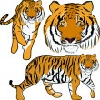 Hand drawn tiger vector — Stock Vector