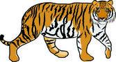 Hand drawn tiger vector — Stock Vector