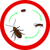 Stop Cockroach sign — Stock Vector