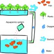 Stock Vector: Aquaponics system