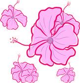 Hibiscus flower — Stock Vector