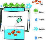 Aquaponics system — Stock Vector