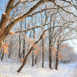 Paceful trees in winter background - Stock Photo