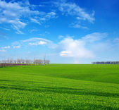 Green field in spring day — Stock Photo