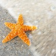 Starfish — Stock Photo #28187363