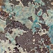 Grey lichen make a pattern on a rock face — Stock Photo