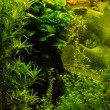 Stock Photo: Seaweeds and plants in water
