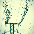 Stock Photo: Birds on power wires flying together