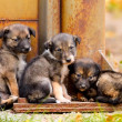 Lost puppy stand together  — Stock Photo