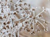 Winter scene — Stok fotoğraf