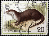 JAPAN - CIRCA 1977: A stamp printed in Japan shows Lutra lutra w — Stock Photo